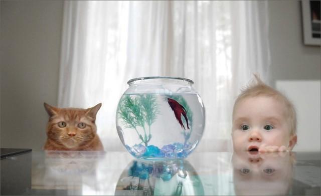 peixe_gato_bebe