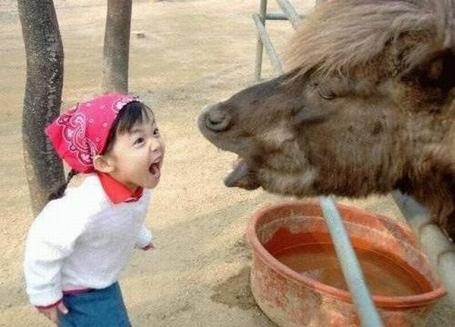 criancas_animais